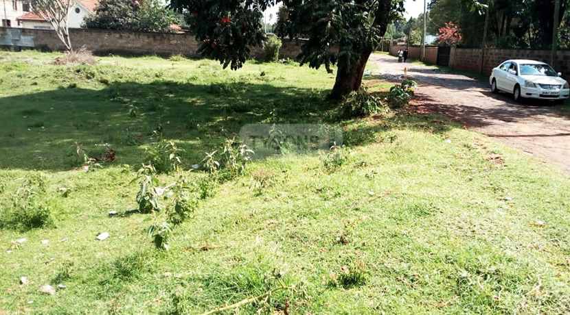 elgon_view_plot_tysons_limited_2