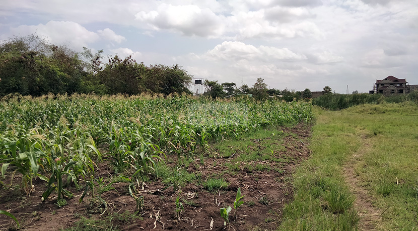 land-for-sale-in-ruiru-tysons-limited-5