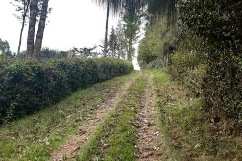 land-for-sale-in-limuru-tysons-limited-4